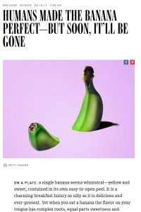 Humans Made the Banana Perfect – But Soon, It'll Be Gone summary