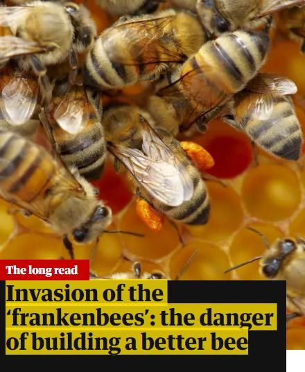 Image of: Invasion of the 'Frankenbees'