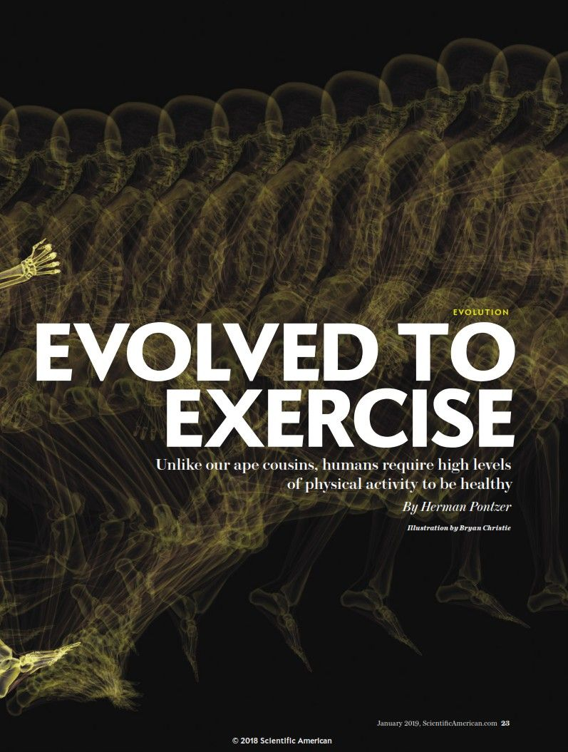 Image of: Evolved to Exercise