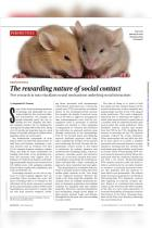 The Rewarding Nature of Social Contact