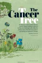 The Cancer Tree