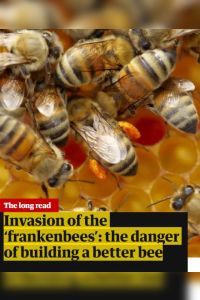 Invasion of the 'Frankenbees' summary